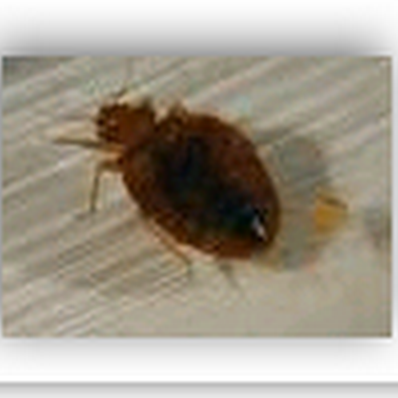 Bed bugs found at hospital in Ohio
